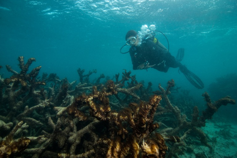 a-scuba-diver-swims-over-dead-coral-in-the-great-barrier-reef